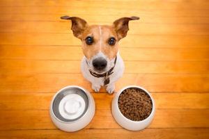 platos para tu mascota