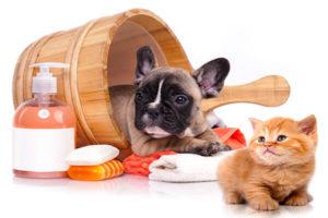 salud y bienestar mascotas
