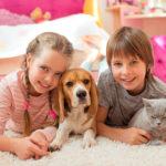 Tienda para mascotas online, accesorios, collares y más para perros y gatos – pepe ganga blog