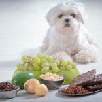 Que no pueden comer los perros